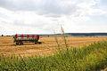Blick von Ohrum auf den Oderwald IMG 9818.jpg