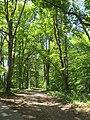 Bois, route de l'Aérodrome, Port-Sainte-Foy-et-Ponchapt, Fougueyrolles 3.jpg