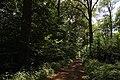 Bois d'Acren 02.jpg