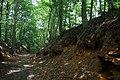 Bois du Pottelberg - Pottelbergbos 11.jpg