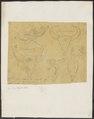 Bos gaurus - schedel - 1700-1880 - Print - Iconographia Zoologica - Special Collections University of Amsterdam - UBA01 IZ21200179.tif