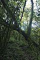 Bosque - Bertamirans - Rio Sar - 027.jpg