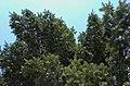 BotGardenFomin DSC 0123-1.jpg