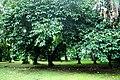 Botanic garden limbe150.jpg
