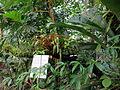 Botanical garden (3).jpg