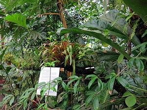 Botanical Garden of TU Darmstadt - Greenhouse