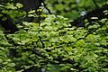 Botanicka basta СП005 02.jpg