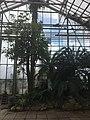 Botanische tuinen Utrecht 32.jpg