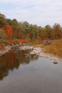 Bowman Creek looking downstream in its lower reaches.JPG