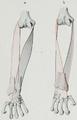 Braus 1921 172.png