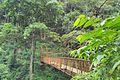 Bridge in abbi falls.jpg