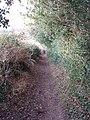 Bridleway with holly hedge, near Amersham - geograph.org.uk - 115436.jpg