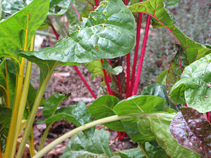 English: Bright Lights Swiss Chard with red an...