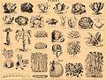 Brockhaus and Efron Encyclopedic Dictionary b42 668-1.jpg