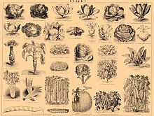 Brockhaus and Efron Encyclopedic Dictionary b42 668-1.jpg