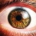 Brown-eye.jpg