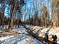 Bryansky District, Bryansk Oblast, Russia - panoramio (31).jpg