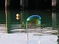Bubbles 04.jpg