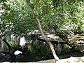 Bucuresti, Romania, Parcul Cismigiu; B-II-a-A-19655 (Lacul Lebedelor 1).JPG