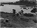 Bullocks pulling kauri log across body of water (AM 88412-1).jpg
