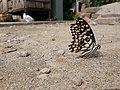Butterfly20171025 124002.jpg