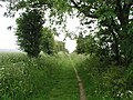 Byway on top of the South Downs - geograph.org.uk - 1018810.jpg