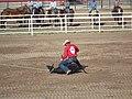 CFD Tie-down roping Kyle Lucas.jpg