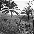 CH-NB - Belgisch-Kongo, Thysville (Mbanza Ngungu)- Landschaft - Annemarie Schwarzenbach - SLA-Schwarzenbach-A-5-26-013.jpg