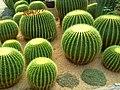 Cactus garden IL San Lake - panoramio.jpg