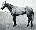 Caligula (horse).jpg