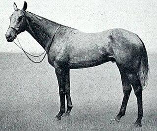 Caligula (horse) Irish-bred Thoroughbred racehorse