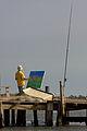 Camargue peintre Camargue a Beaduc 1-2.jpg