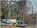Canoas do Centro Náutico do Parque. - panoramio.jpg