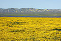 Carizzo plain spring flowers in bloom 7.jpg