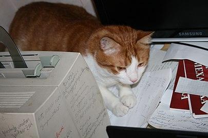 Cat Assistant.jpg