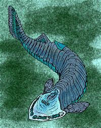 Cephalaspis tenuicornis