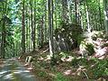 Cesta východně nad Malší pod Jelení horou.jpg