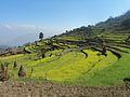 Chalise, Majhuwa 45900, Nepal - panoramio (5).jpg