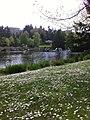 Charleson park vancouver may 2012 - panoramio.jpg