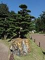 Chi Lin Nunnery 志蓮淨苑 Garden - panoramio (1).jpg