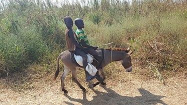 Children transport on donkey back-South Sudan.jpg