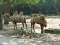 Chimelong Safari Park (Safari on wheels 01).JPG