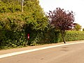 Christchurch, postbox No. BH23 104, Southcliffe Road - geograph.org.uk - 1436223.jpg