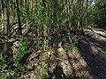 Chuchelský háj, Malá Chuchle, cesta nad Čertovou strouhou, zábradlí.jpg
