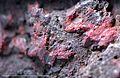 Cinabre Cinnabar Espagne RefMGL38995 MuséumHistoireNaturelleLille GLAM2016 Photo.F.Lamiot 1.jpg