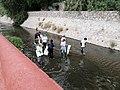 Ciudadanos participando en la Sexta Mega Limpieza Ciudadana en Querétaro, Querétaro.jpg