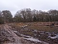 Clear-felling outside Vinney Ridge Inclosure - geograph.org.uk - 1726693.jpg