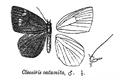 CleosirisCatamita.png