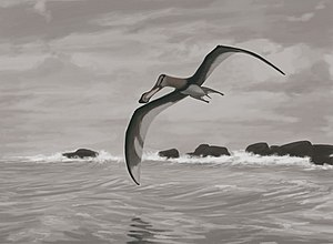 Coloborhynchus - Restoration of the possible species C. piscator