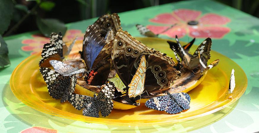 ComputerHotline - Lepidoptera sp. (by) (34).jpg